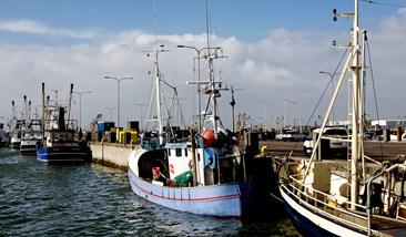 Esbjerg fiskerihavn