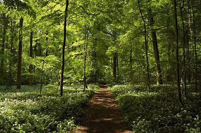 risskov århus denmark