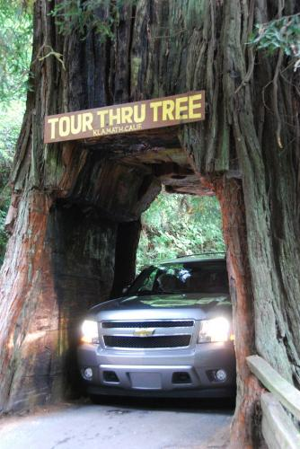Redwood forest California Eureka