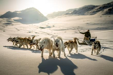 Northern Greenland Dog sledge