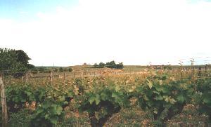 Vineyeards everywhere in BORDEAUX  !