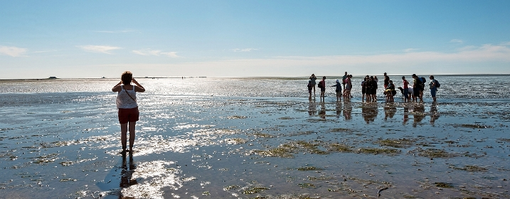 The Wadden Sea National Park