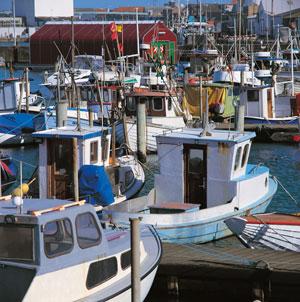 Hirtshals Havn Fiskefestival