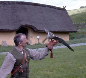 Falkoneropvisning ved vikingecenter Fyrkat