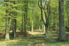 Grib Skov Kongernes Nordsjælland Hillerød
