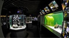 Øresundsakvariet / Elsinore saltwater aquarium Elsinore