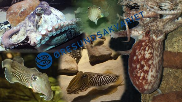 Øresundsakvariet Kriblende krebsdyr - efterårsferie Helsingør