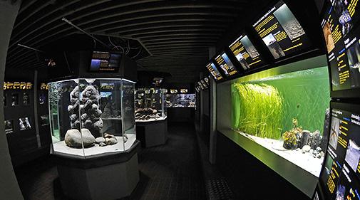 Havets påskeæg  på Øresundsakvariet Helsingør