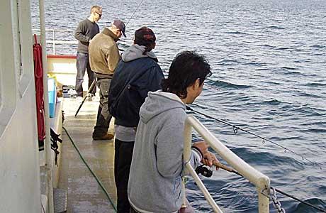Havfiskeri Havhesten Nivå